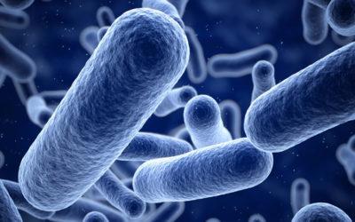 La OMS alertada por la muerte de una mujer por una Súper Bacteria